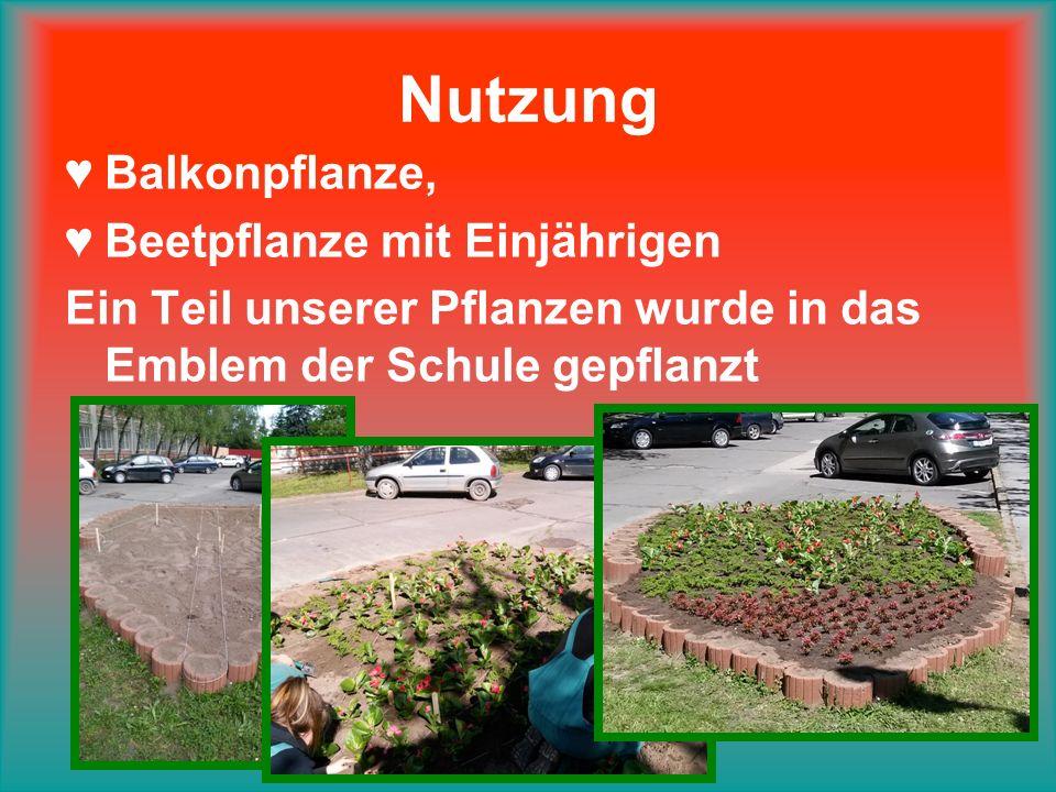 Nutzung ♥Balkonpflanze, ♥Beetpflanze mit Einjährigen Ein Teil unserer Pflanzen wurde in das Emblem der Schule gepflanzt
