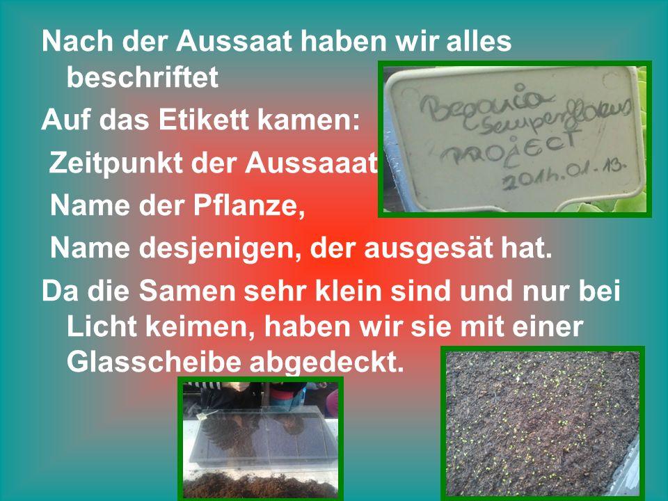 Nach der Aussaat haben wir alles beschriftet Auf das Etikett kamen: Zeitpunkt der Aussaaat Name der Pflanze, Name desjenigen, der ausgesät hat.