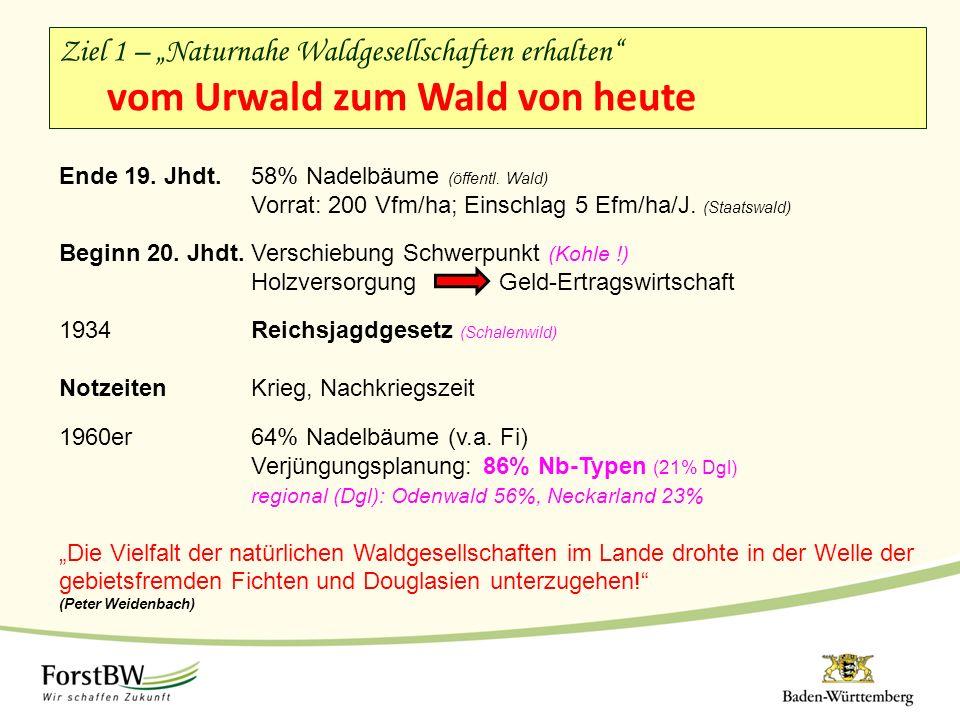 Ende 19. Jhdt. 58% Nadelbäume (öffentl. Wald) Vorrat: 200 Vfm/ha; Einschlag 5 Efm/ha/J.