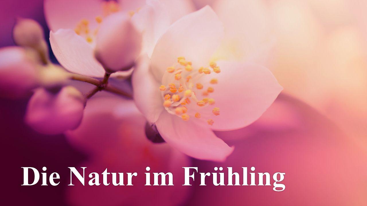 Die Natur im FrühlingDie Natur im Frühling