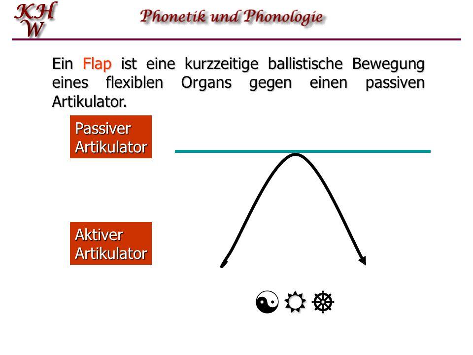 Aktiver Artikulator Passiver Artikulator [][] Ein Flap ist eine kurzzeitige ballistische Bewegung eines flexiblen Organs gegen einen passiven Artikulator.