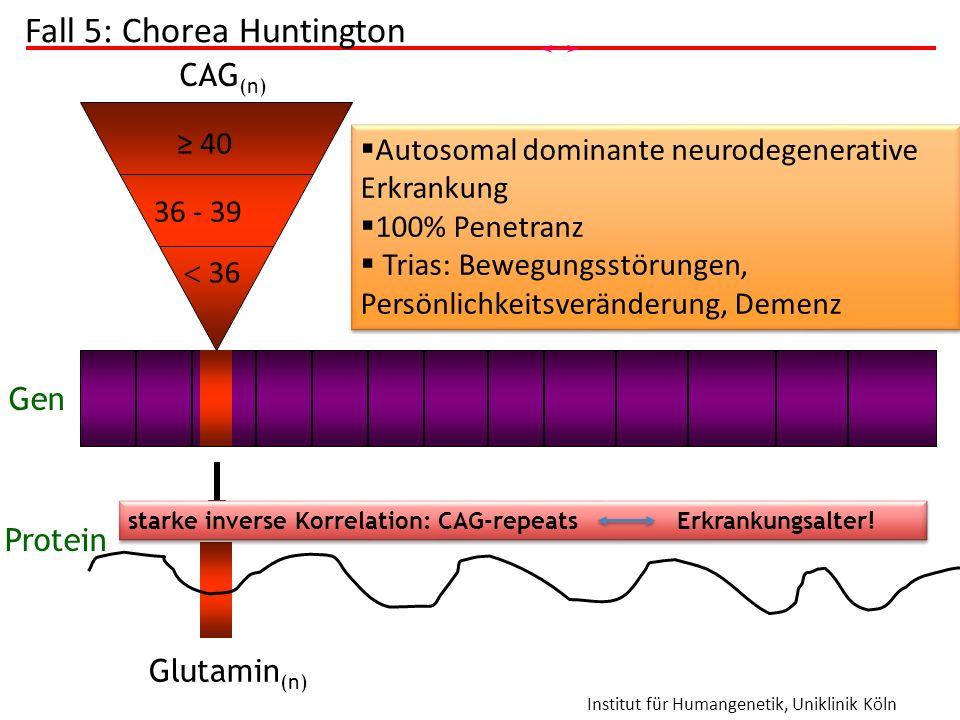 Institut für Humangenetik, Uniklinik Köln  36 ≥ 40 36 - 39 CAG (n) Glutamin (n) Gen Protein  pathologisch; volle Penetranz  Expansion möglich; vari