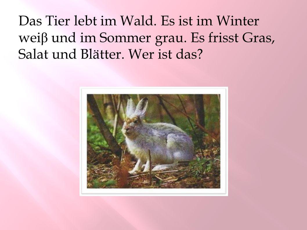 Das Tier lebt im Wald. Es ist im Winter weiβ und im Sommer grau.