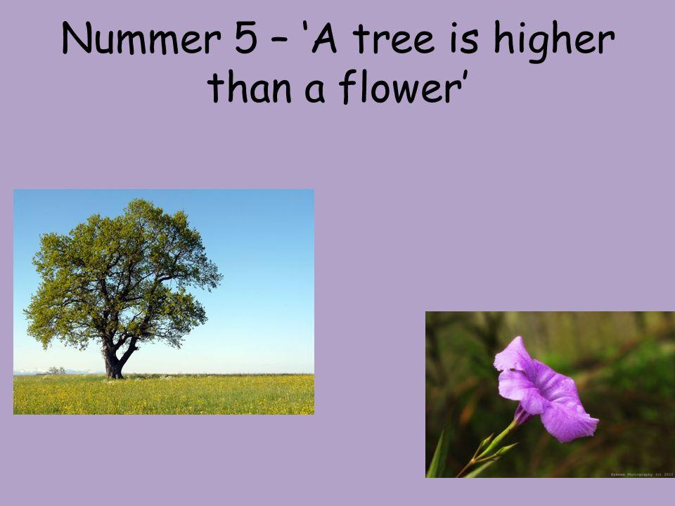 Nummer 5 - Antwort Ein Baum ist höher als eine Blume.