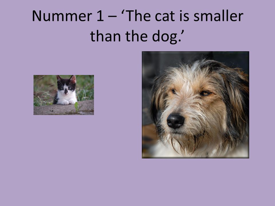 Nummer 1 – 'The cat is smaller than the dog.'