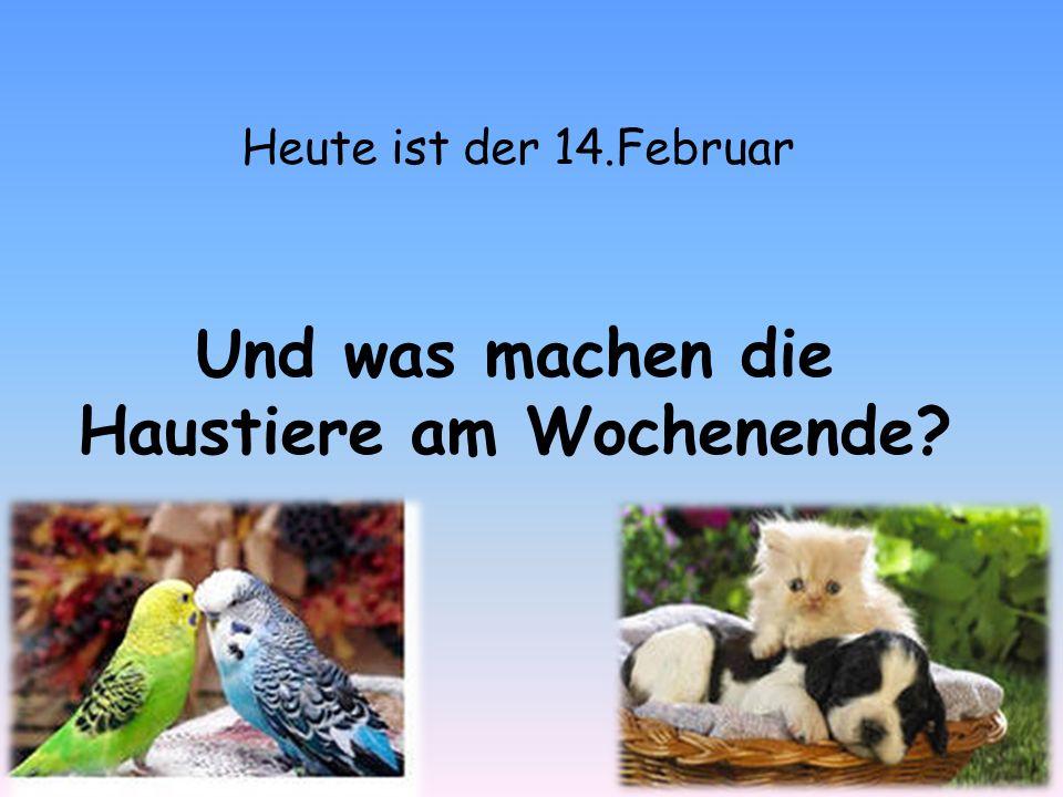 Und was machen die Haustiere am Wochenende Heute ist der 14.Februar