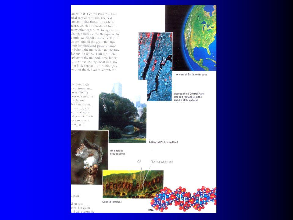 生物学有序等级中的递进层次 分子水平 - 葡萄糖 细胞水平 - 平滑肌细胞 组织水平 - 平滑肌组织 器官水平 - 血管 器官系统水平 - 循环系统 个体水平 - 许多器官系统 更高水平 : 群体, 群落, 生态系统.