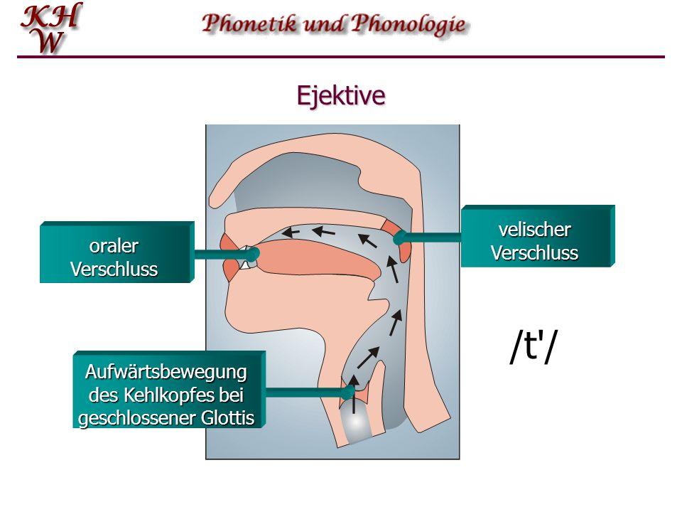 Glottalischer Luftstrom: egressiv Das folgende Bild zeigt, wie durch den velischen, den glottalen sowie durch einen oralen Verschluss ein Raum gebilde