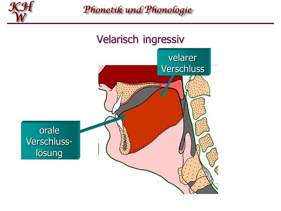 Velarisch ingressiv oraler Verschluss velarer Verschluss Ab- und Rück- wärtsbewegung der Zunge