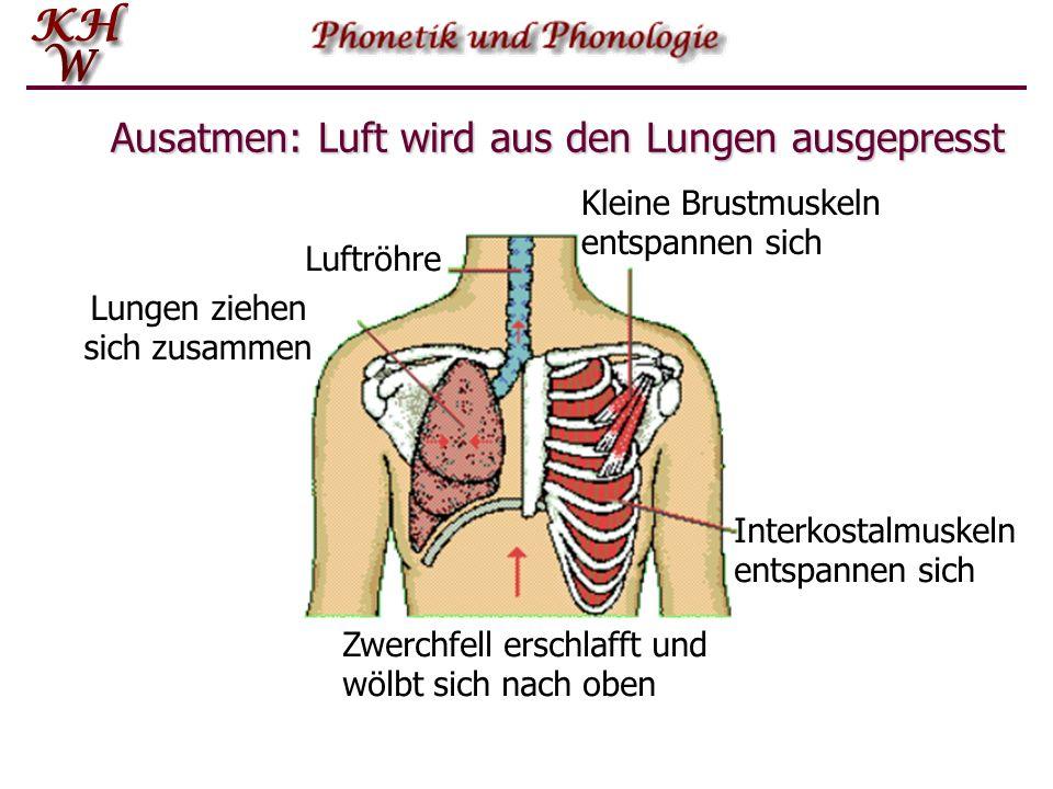 Ausatmen Das normale Ausatmen ist ein eher passiver Vorgang. Die Zwischenrippen- bzw. die Zwerchfellmuskeln erschlaffen, wodurch sich der Brustkorb in