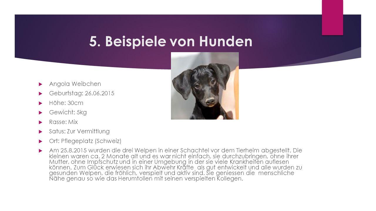 5. Beispiele von Hunden  Angola Weibchen  Geburtstag: 26.06.2015  Höhe: 30cm  Gewicht: 5kg  Rasse: Mix  Satus: Zur Vermittlung  Ort: Pflegeplat