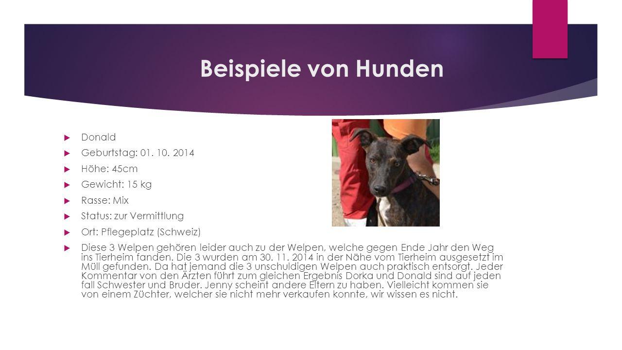 Beispiele von Hunden  Donald  Geburtstag: 01. 10. 2014  Höhe: 45cm  Gewicht: 15 kg  Rasse: Mix  Status: zur Vermittlung  Ort: Pflegeplatz (Schw