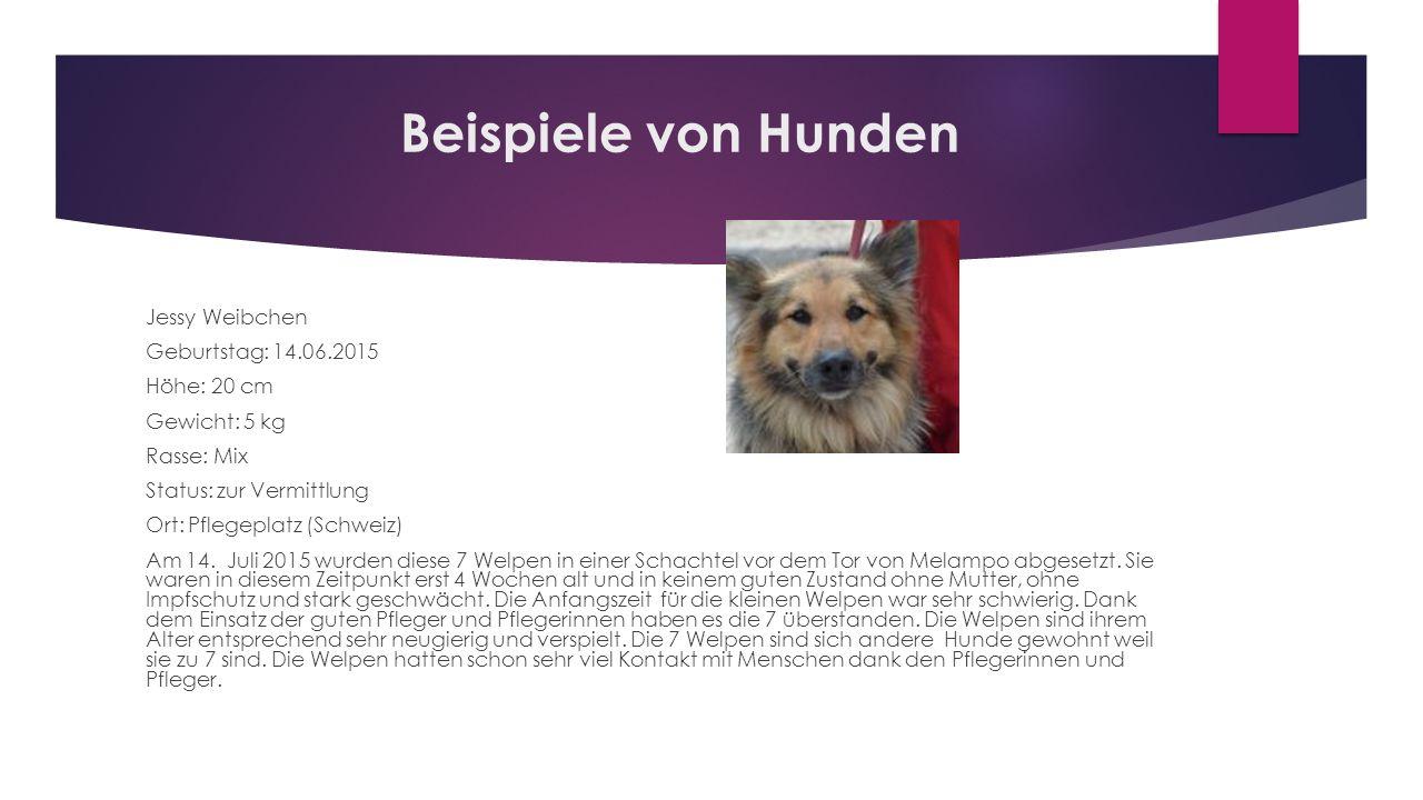 Beispiele von Hunden Jessy Weibchen Geburtstag: 14.06.2015 Höhe: 20 cm Gewicht: 5 kg Rasse: Mix Status: zur Vermittlung Ort: Pflegeplatz (Schweiz) Am