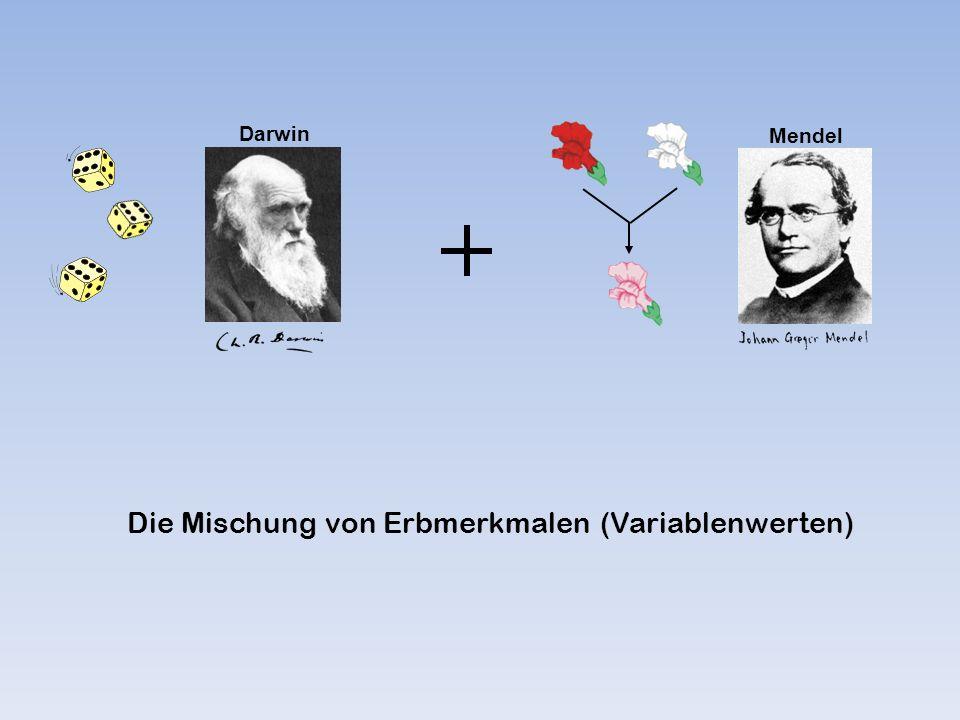 Darwin Mendel Die Mischung von Erbmerkmalen (Variablenwerten)