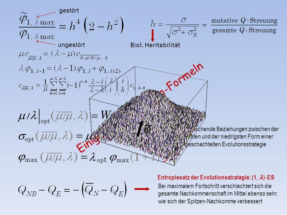 )1( op t e  1 W  ),(   )1( opt  1  ),(  Biol. Heritabilität Bei maximalem Fortschritt verschlechtert sich die gesamte Nachkommensc