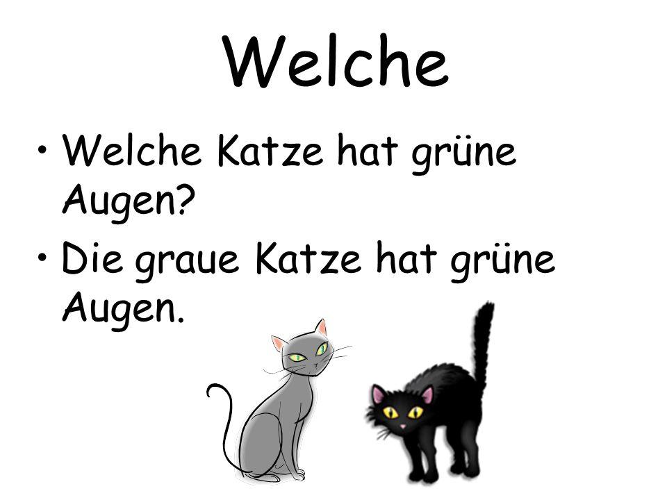 Welche Welche Katze hat grüne Augen? Die graue Katze hat grüne Augen.