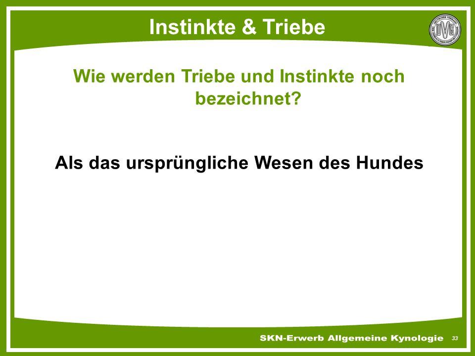 33 Instinkte & Triebe Wie werden Triebe und Instinkte noch bezeichnet? Als das ursprüngliche Wesen des Hundes