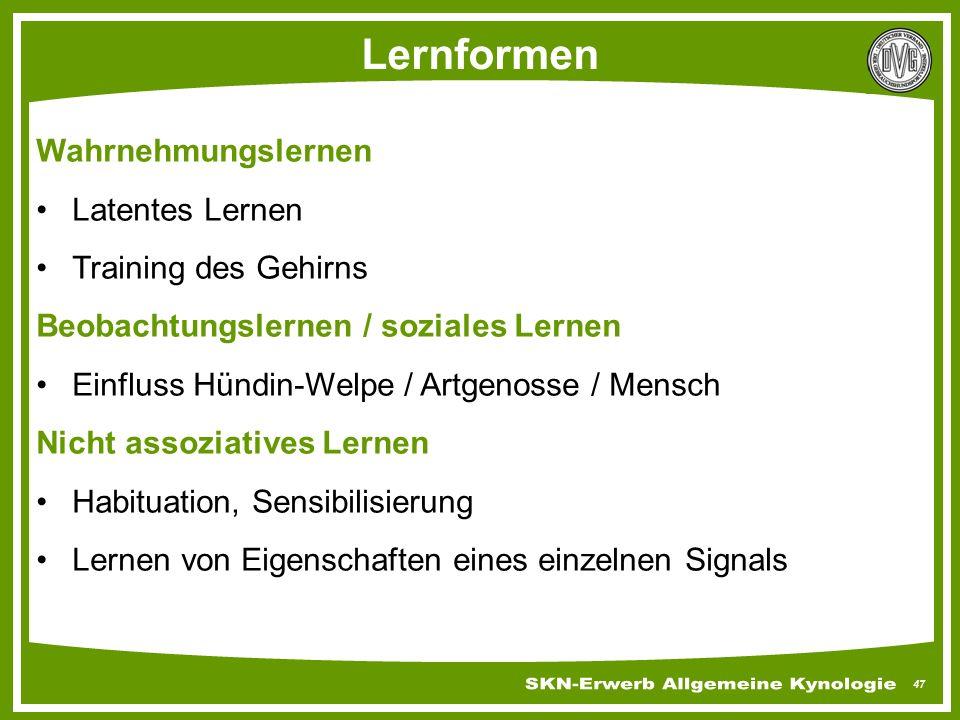 47 Lernformen Wahrnehmungslernen Latentes Lernen Training des Gehirns Beobachtungslernen / soziales Lernen Einfluss Hündin-Welpe / Artgenosse / Mensch