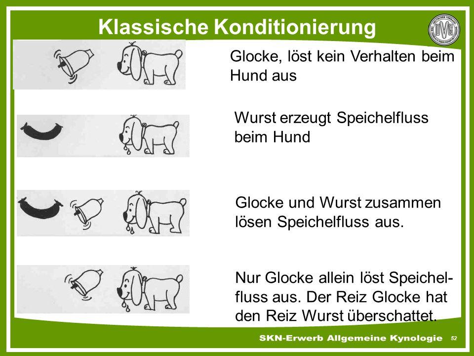 52 Klassische Konditionierung Glocke, löst kein Verhalten beim Hund aus Wurst erzeugt Speichelfluss beim Hund Glocke und Wurst zusammen lösen Speichel