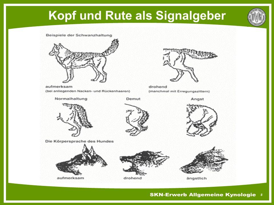 9 Die Hunderute und ihre Signale Relativ hochgetragen freudig, aufmerksam Relativ abwärts hängendgelassen, sicher Zwischen die Läufe geklemmtunsicher, unterwürfig Hochgetragen, schräg, steifimponierend, angespannt Ansteigend, steif, gerade angriffsbereit