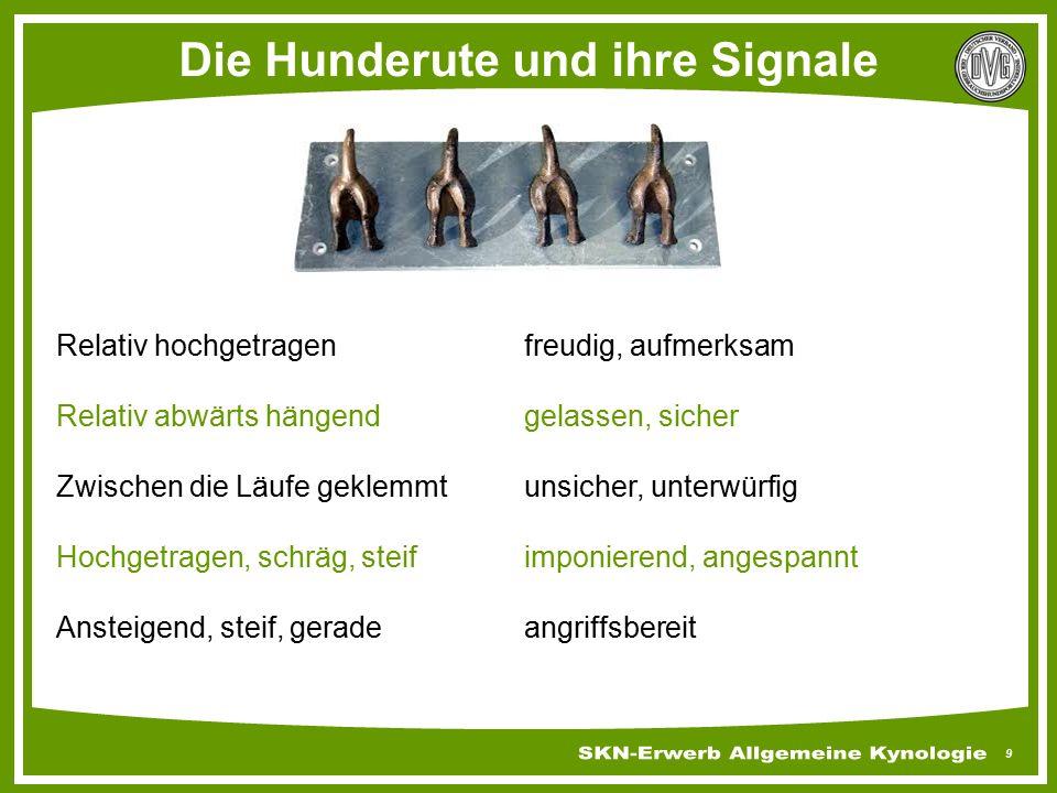 30 Instinkte & Triebe Merke Häufiger Wechsel des Hundeführers, d.h.