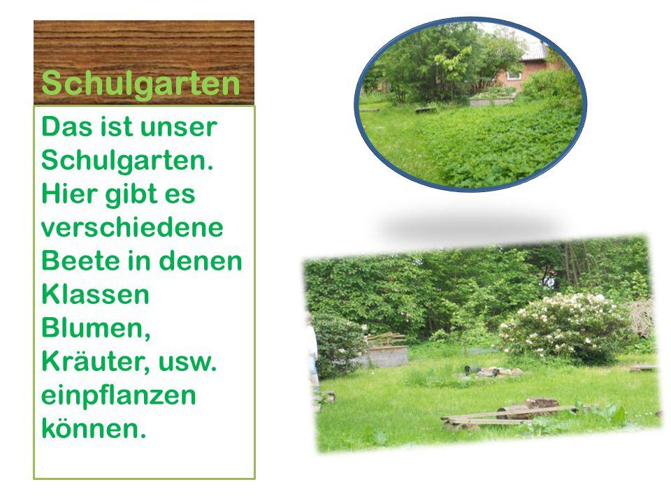Schulgarten Das ist unser Schulgarten.