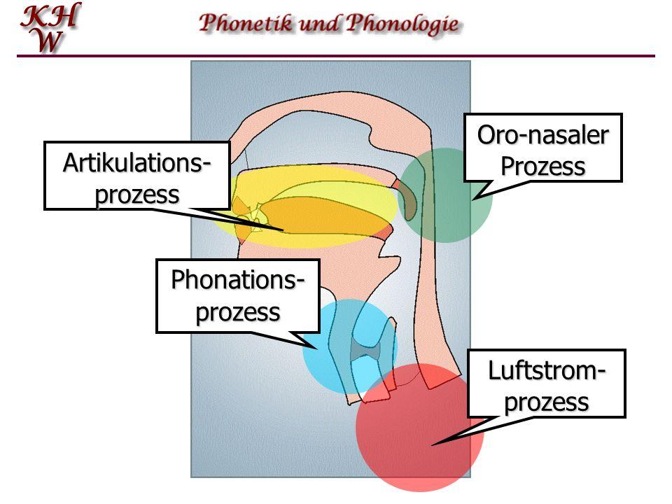 Luftstrom- prozess Phonations- prozess Oro-nasalerProzess Artikulations-prozess
