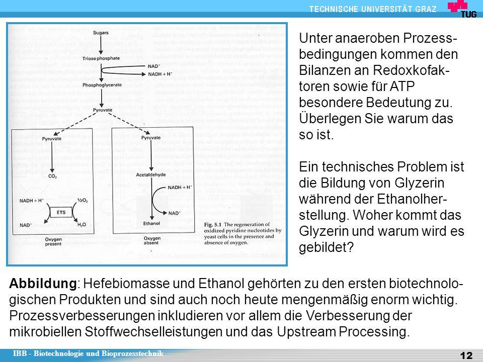 IBB - Biotechnologie und Bioprozesstechnik 12 Abbildung: Hefebiomasse und Ethanol gehörten zu den ersten biotechnolo- gischen Produkten und sind auch noch heute mengenmäßig enorm wichtig.