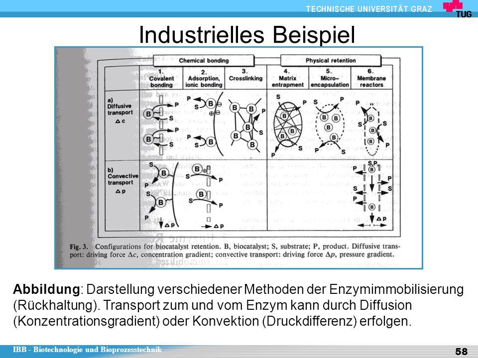 IBB - Biotechnologie und Bioprozesstechnik 58 Industrielles Beispiel Abbildung: Darstellung verschiedener Methoden der Enzymimmobilisierung (Rückhaltung).