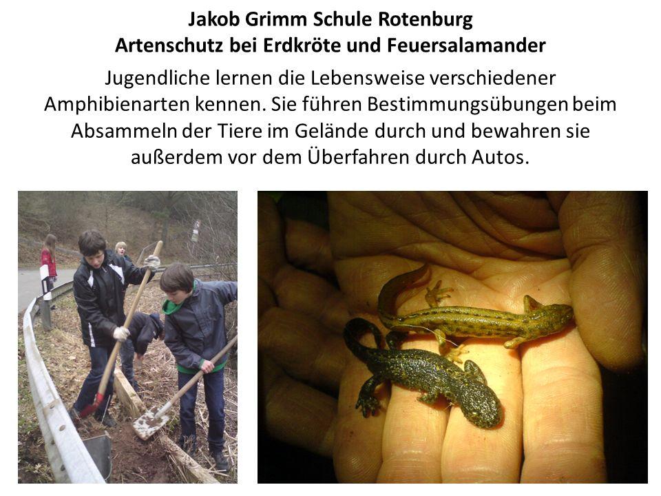 Jakob Grimm Schule Rotenburg Artenschutz bei Erdkröte und Feuersalamander Jugendliche lernen die Lebensweise verschiedener Amphibienarten kennen.