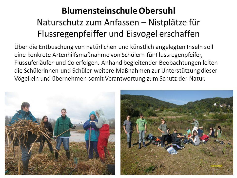 Blumensteinschule Obersuhl Naturschutz zum Anfassen – Nistplätze für Flussregenpfeiffer und Eisvogel erschaffen Über die Entbuschung von natürlichen u