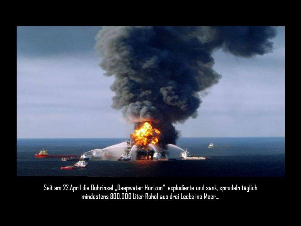Im Golf von Mexico droht die größte Umweltkatastrophe in der US-Geschichte.