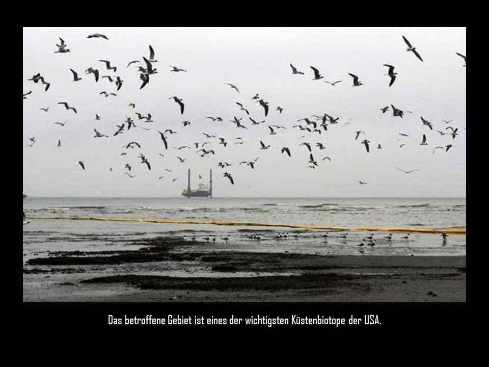 Die Ölkatastrophe im Golf von Mexico wird immer bedrohlicher.