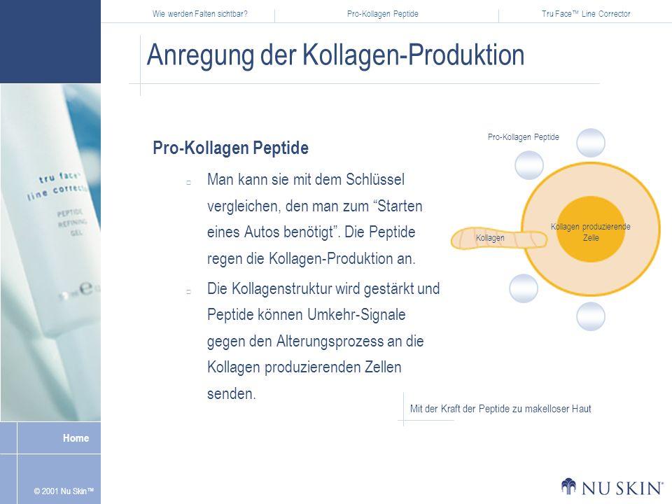 Wie werden Falten sichtbar?Pro-Kollagen PeptideTru Face Line Corrector Home © 2001 Nu Skin Anregung der Kollagen-Produktion Pro-Kollagen Peptide Man kann sie mit dem Schlüssel vergleichen, den man zum Starten eines Autos benötigt.