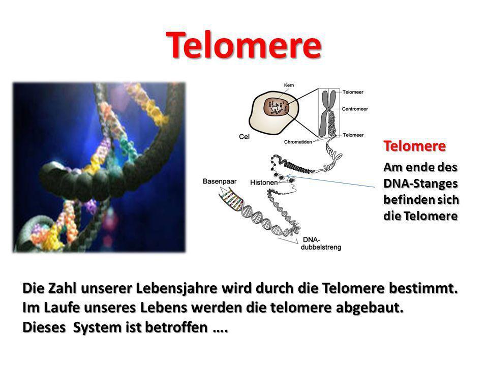 Telomere sind betroffen… Belastetes Wasser und unzureichende Wasserzufuhr (Dehydration) Ernährung (Übersäuerung, chemische Zusatzstoffe, Herbizide, Pestizide, Mineralstoffmangel, synthetische Hormone) Krankheiten Medikamente (Mobilfunkstrahlung, Chemo- therapie, usw.