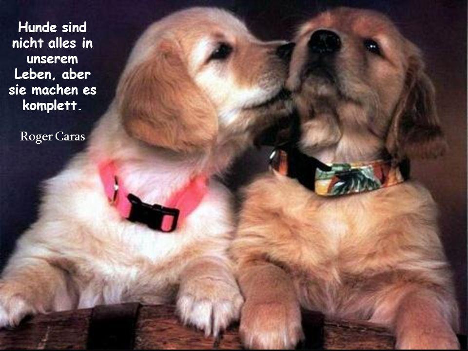 Hunde lieben ihre Freunde und beißen ihre Feinde, im Gegensatz zu den Menschen, die dazu tendieren, Liebe und Hass zu vermischen. Sigmund Freud