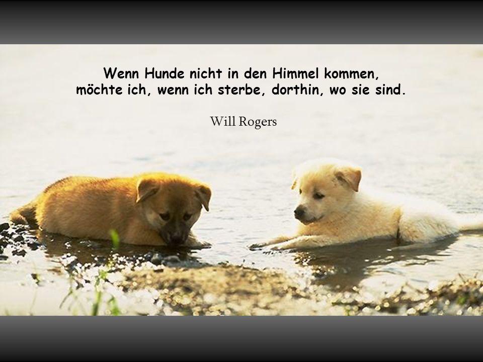 Wenn Hunde nicht in den Himmel kommen, möchte ich, wenn ich sterbe, dorthin, wo sie sind.