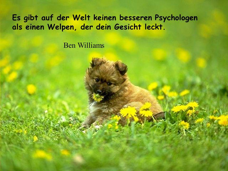 Es gibt auf der Welt keinen besseren Psychologen als einen Welpen, der dein Gesicht leckt.