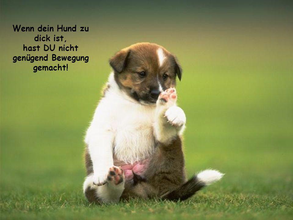 Wenn dein Hund zu dick ist, hast DU nicht genügend Bewegung gemacht!