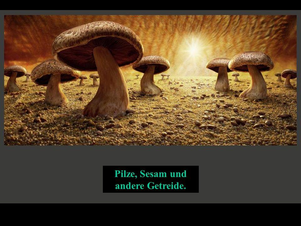 Pilze, Sesam und andere Getreide.
