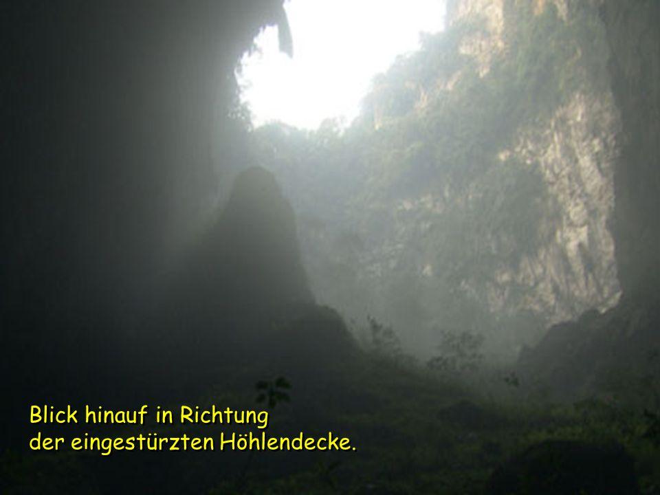 Eine Doline: Eine Doline: Ein Mini-Dschungel 400 m unter der Oberfläche. Dolinen entstehen, wenn eine Höhlendecke zusammenbricht und so dem Tageslicht