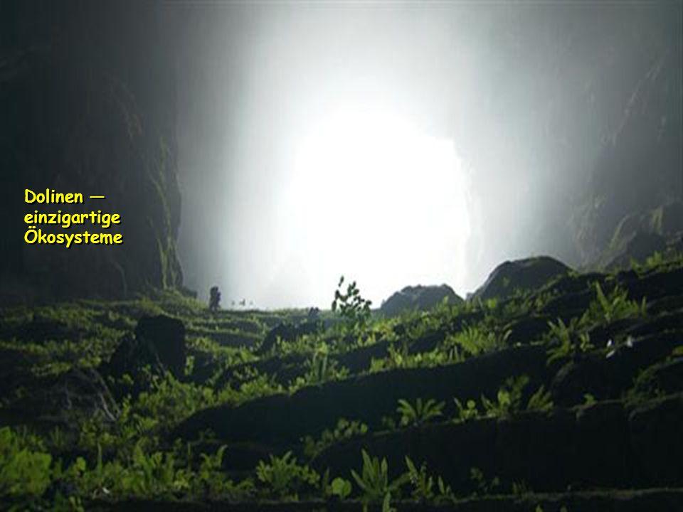 Hang Son Doong Das Loch in der Decke, ist mindestens 300 Meter breit. Das Licht, dringt tief in die Höhle, zeigt zum ersten Mal die irren Proportionen