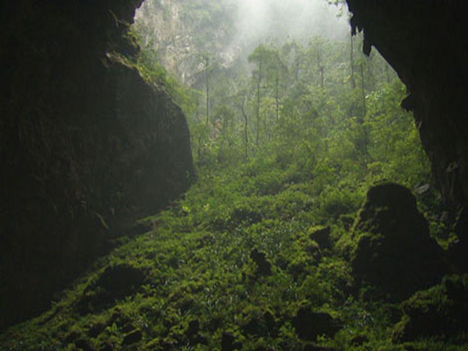 .. Warum wurde die Höhle so groß? Die perfekte Formel war: riesige Mengen an Wasser, tropisches Klima und der Fluss folgte einer schmalen Verwerfungsl