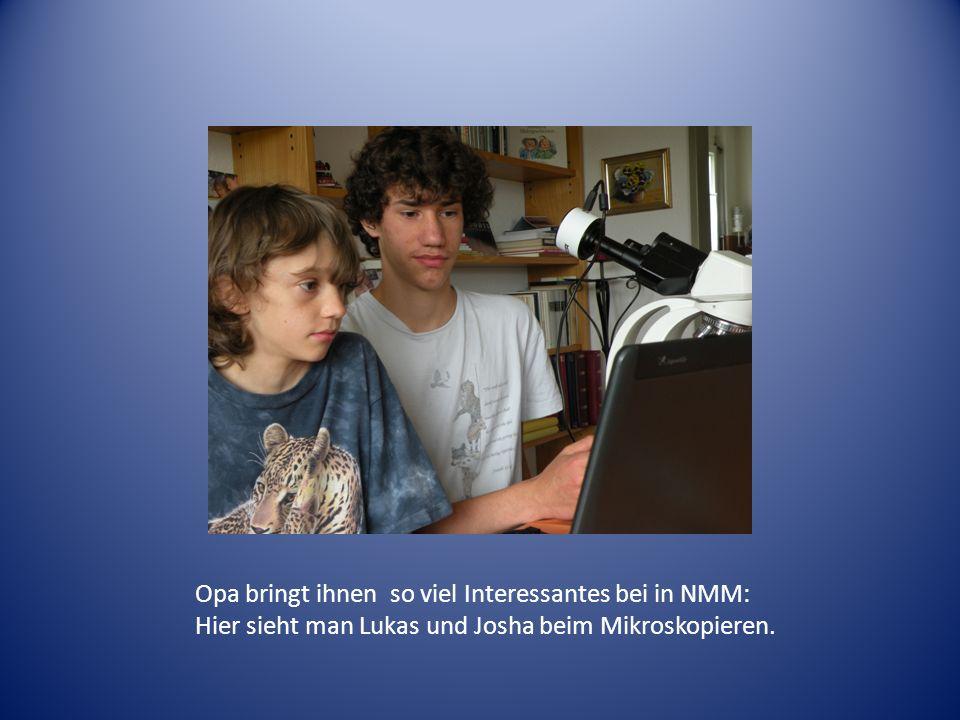 Opa bringt ihnen so viel Interessantes bei in NMM: Hier sieht man Lukas und Josha beim Mikroskopieren.