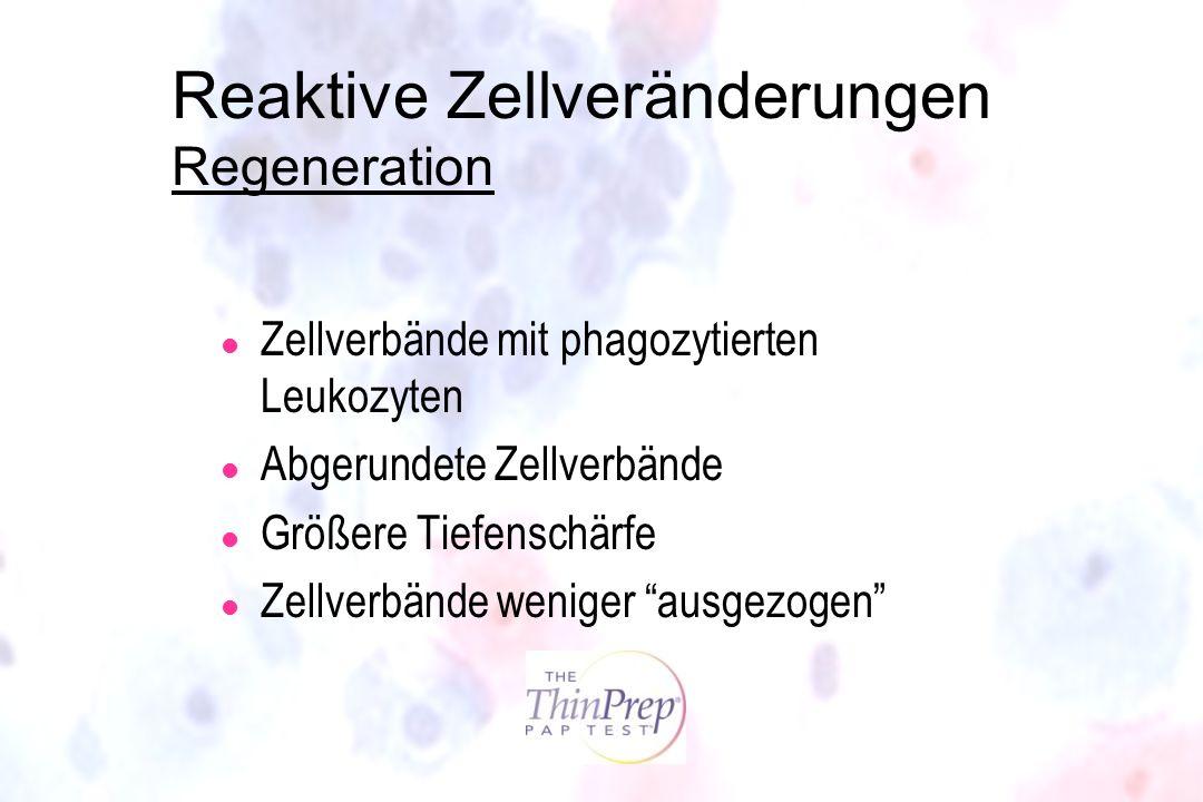 Reaktive Zellveränderungen Regeneration l Zellverbände mit phagozytierten Leukozyten l Abgerundete Zellverbände l Größere Tiefenschärfe l Zellverbände