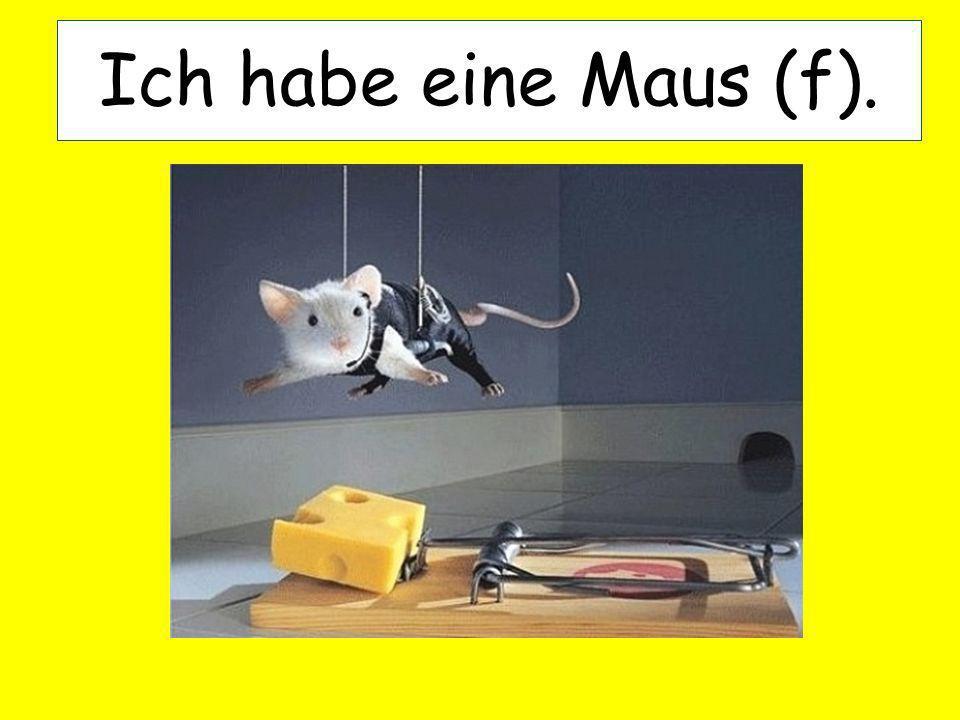 Ich habe eine Maus (f).