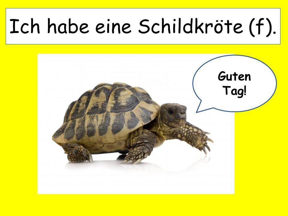 Ich habe eine Schildkröte (f). Guten Tag!