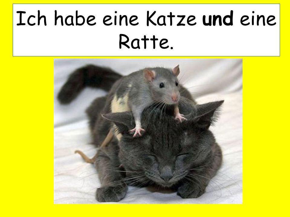 Ich habe eine Katze und eine Ratte.