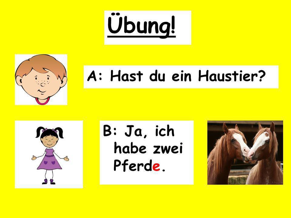 A: Hast du ein Haustier B: Ja, ich habe zwei Pferde. Übung!