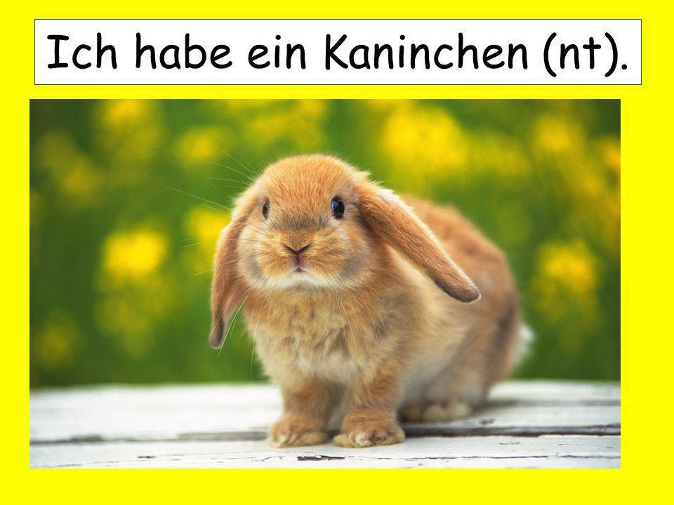 Ich habe ein Kaninchen (nt).